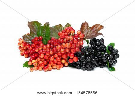 Berries of a viburnum and a chokeberry on a white background. Horizontal photo.