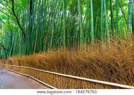 Bamboo Grove Nature Pathway, Bamboo Forest At Arashiyama