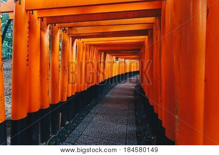 Red Tori Gate of Fushimi Inari Shrine blank pathway in Kyoto Japan