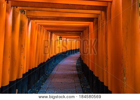 Red Tori Gate Of Fushimi Inari Shrine Blank Pathway In Kyoto