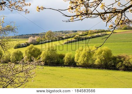 Spring Countryside With Green Fields And Flowering Cherry Trees