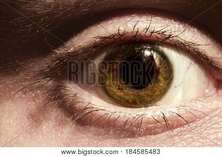Male eye macro. Wide open surprised male look