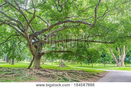 The Walk Under The Shady Trees