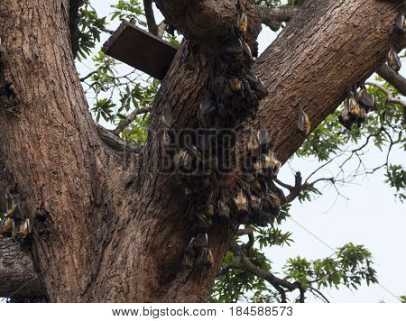 Bats hanging on the tree upside down