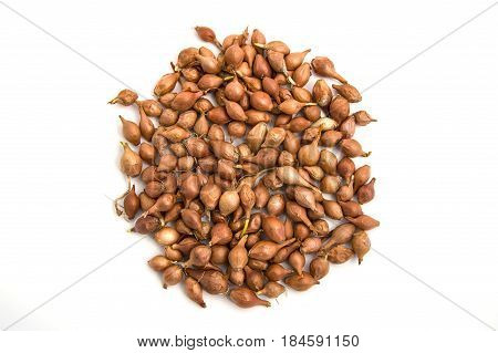 Small onion seeds, small onion seeds, seedable onion seeds white background