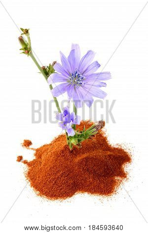 Flower of Chicory with powder chicory isolated on a white background.