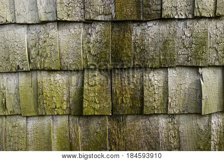 Worn down roof panels covered with moss