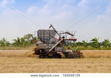 A modern combine harvester harvesting ripe rice in rice field in rural area of Thailand. Harvesting season.