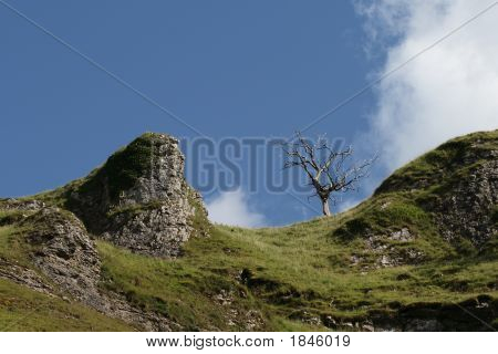 Dead Tree Against The Skyline With Outcrops Of Limestone