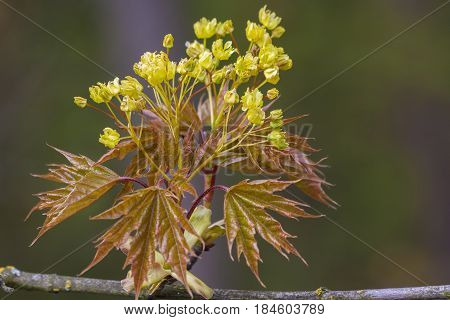Spring twig of the tree in the natural environment