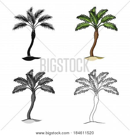 Palm beach tree.Summer rest single icon in cartoon style vector symbol stock web illustration.