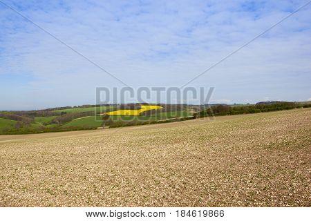 Hillside Seedling Crops