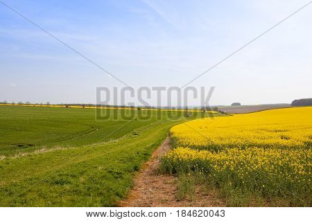Wheat And Oilseed Rape Crops