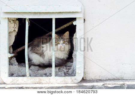Homeless Cat Observes Street