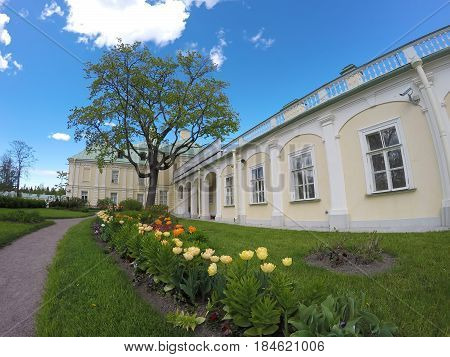 Tulips before the Grand Menshikov Palace. St. Petersburg Lomonosov Russia.