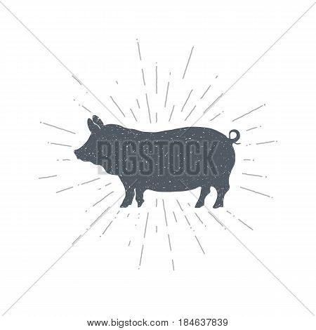 Hand drawn vintage pig. Sketch style. Vector illustration. T-shirt print. Poster. Logo. Retro badge. Piglet. Pork. Meat