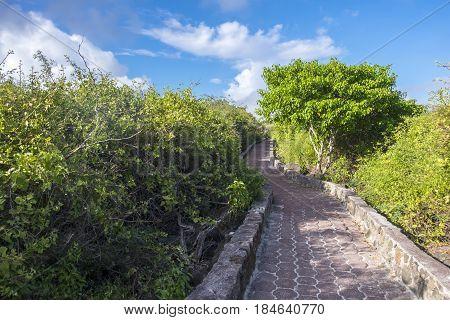 Path to Tortuga Bay or Beach on Santa Cruz Galapagos Islands Ecuador