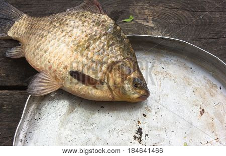 crucian carp (river fish) in a round aluminum bowl on a wo