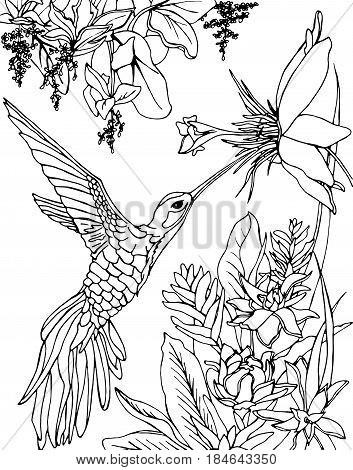 Flying Hummingbird. Hummingbird and flowers. Stylized bird. Hummingbird drinking nectar from flower.Zentangle, doodle and line art. Coloring book page for adult. Drawing by hand. Graphic arts.