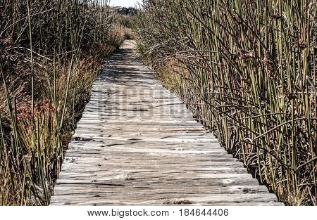 A walking path through tall grass in Table Mountain National Park in Cape Town, South Africa