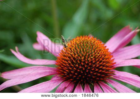 Bee&Flower. Friendship