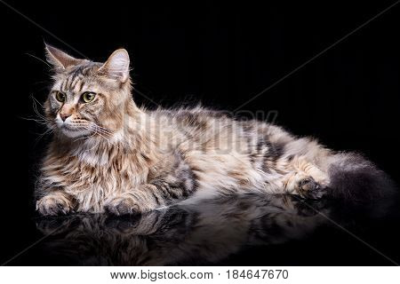 Studio Shot Of An Adorable Tabby Cat