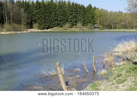 Calm Lake In The Nature
