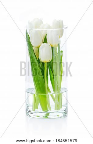 White tulips in glass vase over white background