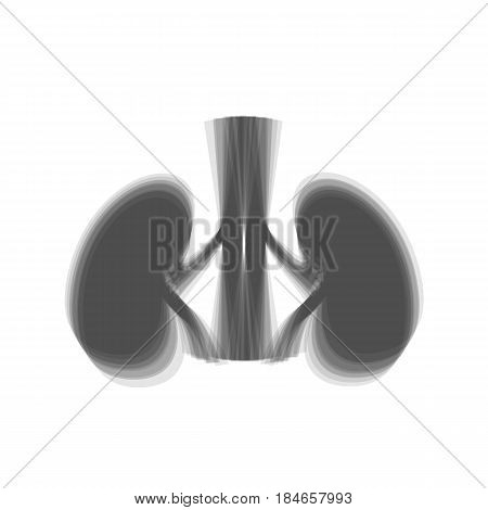 Human anatomy. Kidneys sign. Vector. Gray icon shaked at white background.