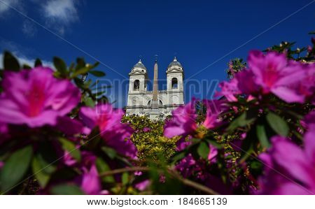 Spanish Steps full of rhododendron flowers for Roman Spring and Trinity Church
