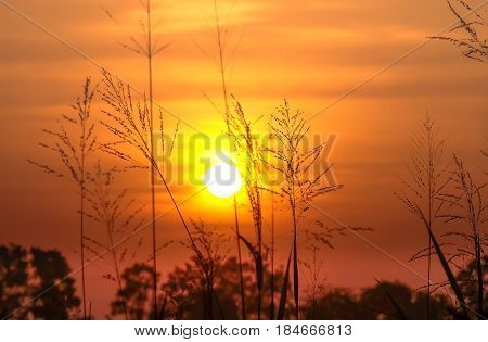 wonderful dramatic scene. fantastic sunrise over the meadow. picturesque rural landscape sunrise at morning time. color in nature.