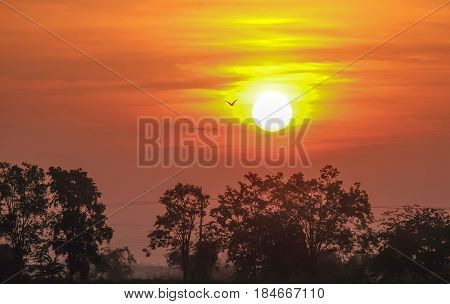 wonderful dramatic scene. fantastic sunrise over the meadow. picturesque rural landscape sunrise at morning time. color in nature. with bird