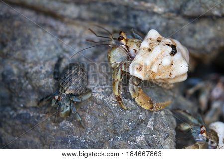 Hermit Crab In Costa Rica