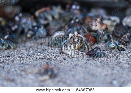 Hermit Crabs In Costa Rica