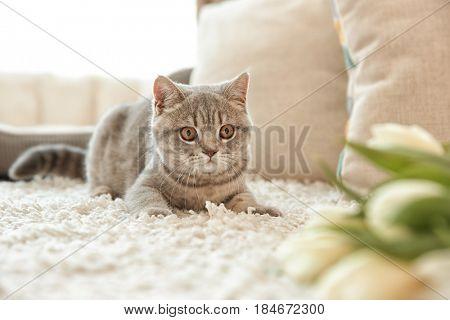Cute cat lying on white rug near tulips in light room
