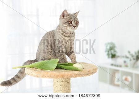 Cute cat sitting on claw sharpener in light room