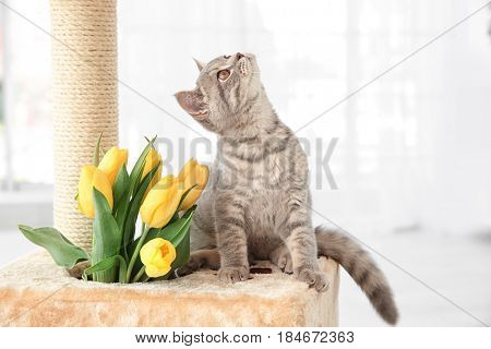 Cute cat sitting on claw sharpener with bouquet of flowers