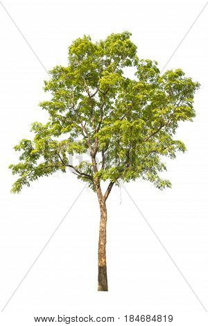 Tree Isolated, Tree On White Bacground, Tree Object.