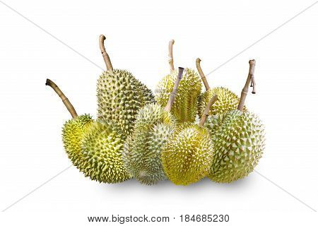 Isolated Mon Thong or Golden Pillow durain king of tropical fruit on white with clipping path
