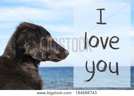 English Text I Love You. Flat Coated Retriever Dog Infront Of Ocean. Water In The Background