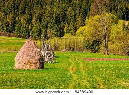 haystack near forest on hillside. agricultural field in mountain area. beautiful countryside landscape.