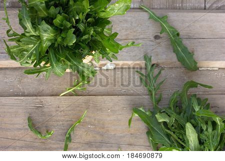 Fresh bunch of arugula toko from the garden on a wooden table