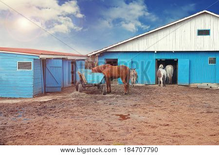 Horses on the farm in the shed on a sunny afternoon. Pets on the farm, blue sky and clouds, mud underfoot.