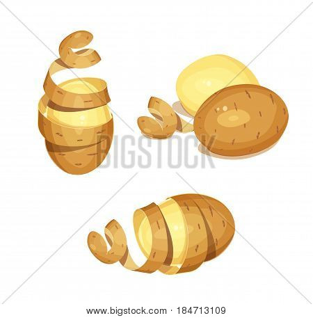 Potatoes with peel. Set of Vegetable foodstuff. Agriculture organic product. Cooking Natural meal. isolated on white background. Eps10 vector illustration.