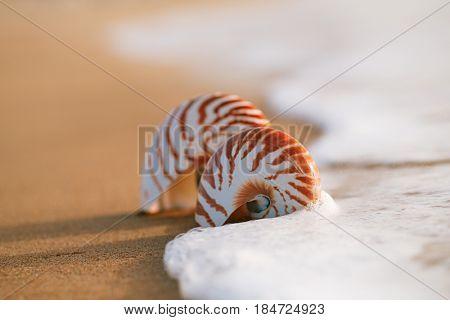 two seashell nautilus on sea beach with waves under sunrise sun light