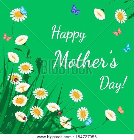 Happy Mothers Day greeting card. Grass with white chamomiles on green. Floral nature background. Vector flower with butterfly and ladybird