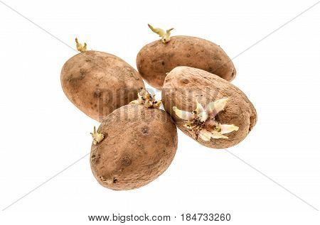 Organic Potatoes With Sprouts Roots Isolated On A White Background.