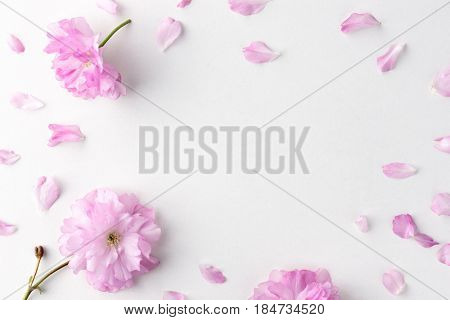 Sakura flowers and petals on white table. Flat lay style. Can be used like background
