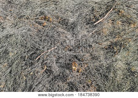 Close up view of the burnt meadow grass.