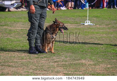 dog sit in being trained safety by soldier on the grass.